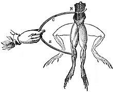 Galvani-frogs-legs-electricity.jpg